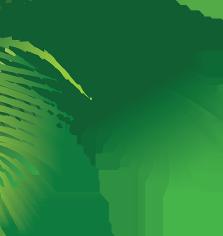 пальма абхазия